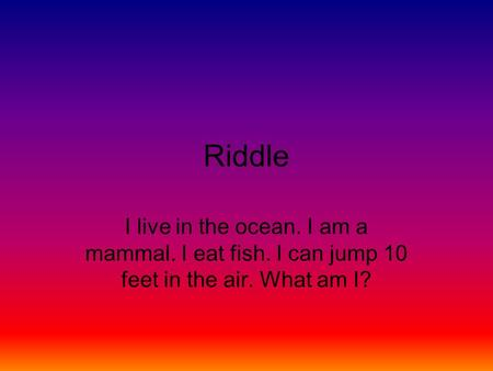 Riddle I live in the ocean. I am a mammal. I eat fish. I can jump 10 feet in the air. What am I?