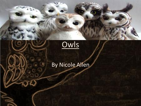 Owls By Nicole Allen. Navigation What are owls intro Facts Eat and drink How they fly How do owls fly?