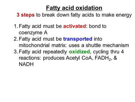 Fatty acid oxidation 3 steps to break down fatty acids to make energy 1.Fatty acid must be activated: bond to coenzyme A 2.Fatty acid must be transported.
