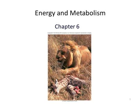 1 Energy and Metabolism Chapter 6. 2 Flow of Energy Thermodynamics – Branch of chemistry concerned with energy changes Cells are governed by the laws.