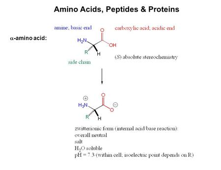 proteins peptides and amino acids lab Amino acids are the building blocks of peptides and proteins, and while they all have common elements of an amine group, a carboxyl group and a side chain, the.
