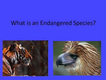 What is an Endangered Species?. What is an endangered species? A species that is at risk of extinction A species with a small or declining population,