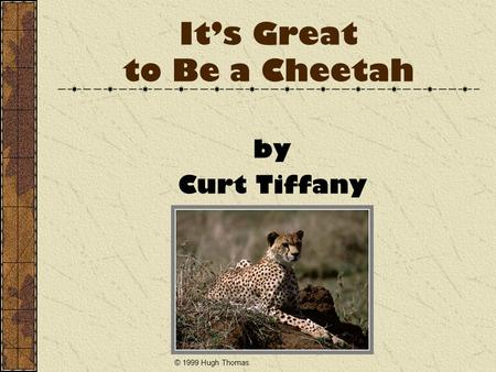 It's Great to Be a Cheetah by Curt Tiffany © 1999 Hugh Thomas.
