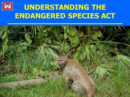 UNDERSTANDING THE ENDANGERED SPECIES ACT. What is the ESA? Federal Law : 1973 (USA), 1976 (Canada) protecting wildlife & plants Conserve & recover species.