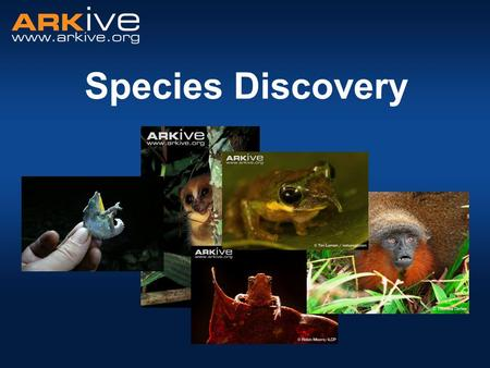 Species Discovery. Diversity of Life Nobody actually knows! Estimates range between 3 - 100 million different species. Latest prediction: = 8.7 million.