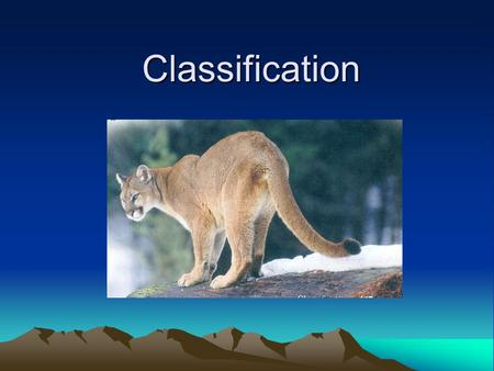 Classification. Why Classify? –To study the great diversity of organisms, biologists must give each organism a name. –Biologists must also attempt to.