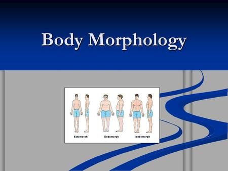 Body Morphology. Your basic body type is determined by genetics. Your basic body type is determined by genetics. You have no way of changing this…………..