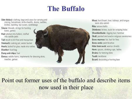 The Buffalo Point out former uses of the buffalo and describe items now used in their place.