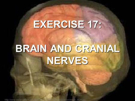 EXERCISE 17: BRAIN AND CRANIAL NERVES
