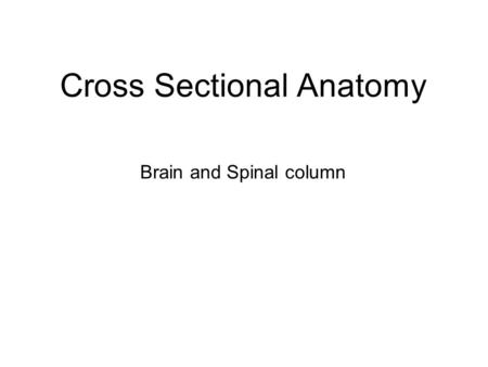 Cross Sectional Anatomy Brain and Spinal column. Brain Anatomy Axial position ▪Caudate nucleus ▪Thalamus ▪Internal capsule ▪Putamen ▪Ventricular system.