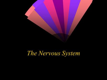 The Nervous System. Neurons  The neuron is the functional unit of the nervous system. Humans have about 100 billion neurons in their brain alone!  While.