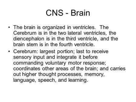 CNS - Brain The brain is organized in ventricles. The Cerebrum is in the two lateral ventricles, the diencephalon is in the third ventricle, and the brain.