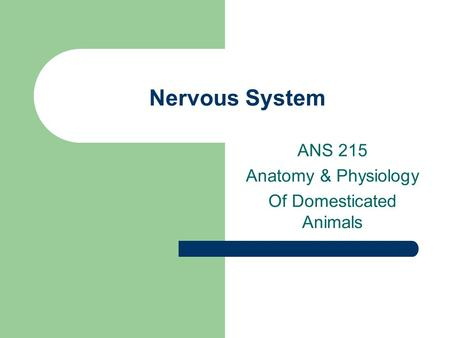 Nervous System ANS 215 Anatomy & Physiology Of Domesticated Animals.