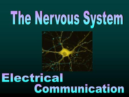 Main Function: This communication system controls and coordinates functions throughout the body and responds to internal and external stimuli. Our nervous.