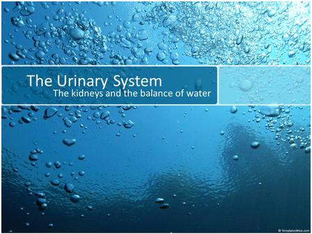 The Urinary System The kidneys and the balance of water.