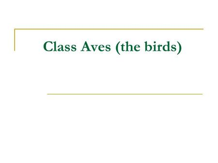 Class Aves (the birds). Birds are amniotes who are from the synapsid line of reptilian evolution. They evolved from archosaurian ancestor. Nearest living.