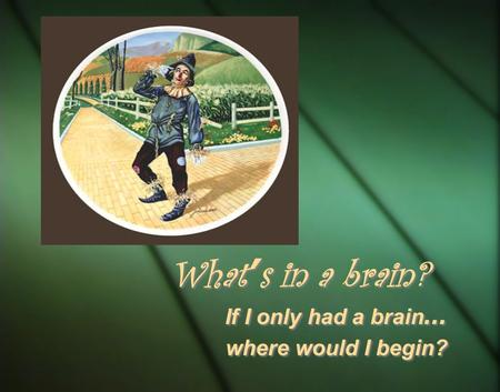 If I only had a brain … where would I begin? If I only had a brain … where would I begin? What ' s in a brain?