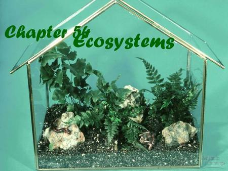 Chapter 54 Ecosystems. An ecosystem consists of all the organisms living in a community as well as all the abiotic factors with which they interact Ecosystems.