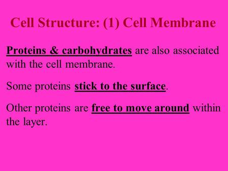 Cell Structure: (1) Cell Membrane Proteins & carbohydrates are also associated with the cell membrane. Some proteins stick to the surface. Other proteins.
