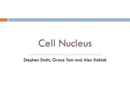 Cell Nucleus Stephen Stahr, Grace Tam and Alex Keklak.