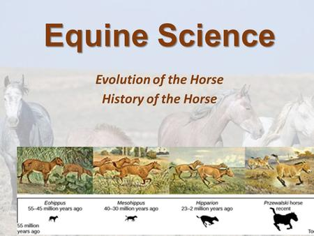Equine Science Evolution of the Horse History of the Horse.