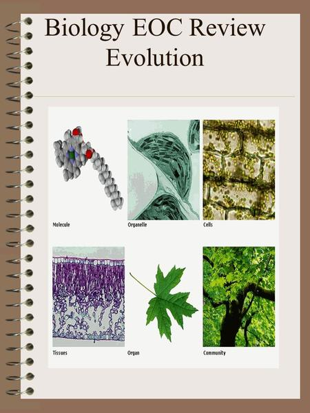 Biology EOC Review Evolution. Evolution Explain biological evolution as the consequence of the interaction of population growth, inherited variability.