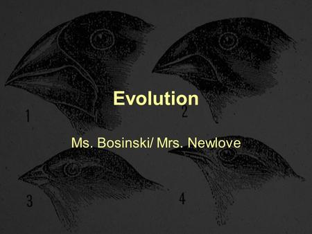 Evolution Ms. Bosinski/ Mrs. Newlove. Evolution Evolution-The process by which species change over time, or become extinct. Species-All the organisms.