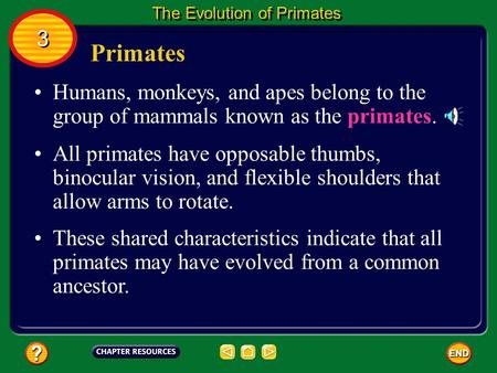Primates Humans, monkeys, and apes belong to the group of mammals known as the primates. All primates have opposable thumbs, binocular vision, and flexible.