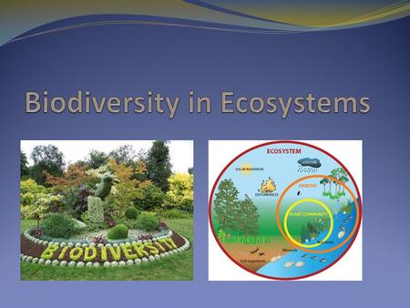 What is Biodiversity? Biodiversity means the richness and variety of life - of genes, species and ecosystem Biodiversity maintains the health of the earth.