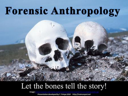 Let the bones tell the story! Image: