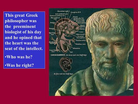 This great Greek philosopher was the preeminent biologist of his day and he opined that the heart was the seat of the intellect. Who was he? Was he right?
