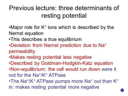 Previous lecture: three determinants of resting potential Major role for K + ions which is described by the Nernst equation This describes a true equilibrium.