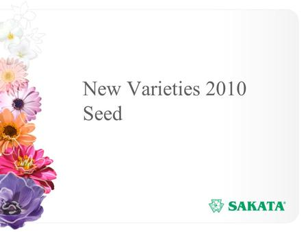 New Varieties 2010 Seed. www.sakata.com 1 Pansy Dynamite Series Flower power through the entire season –Flowers under short days Compact habit Flowers.