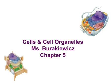 Cells & Cell Organelles Ms. Burakiewicz Chapter 5.
