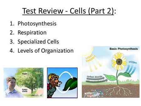 Test Review - Cells (Part 2): 1.Photosynthesis 2.Respiration 3.Specialized Cells 4.Levels of Organization.