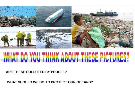 ARE THESE POLLUTED BY PEOPLE? WHAT SHOULD WE DO TO PROTECT OUR OCEANS?