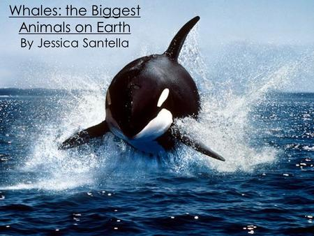 Whales: the Biggest Animals on Earth By Jessica Santella.