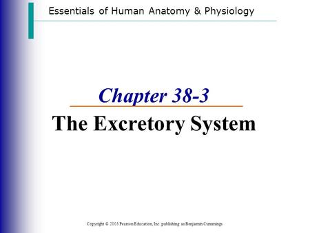 Essentials of Human Anatomy & Physiology Copyright © 2003 Pearson Education, Inc. publishing as Benjamin Cummings Chapter 38-3 The Excretory System.