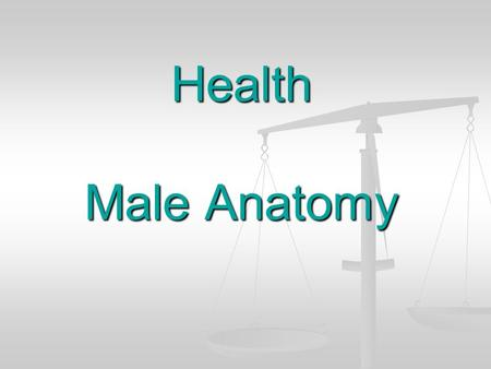 Health Male Anatomy.