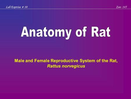 Lab Exercise # 10Zoo- 145 Male and Female Reproductive System of the Rat, Rattus norvegicus.