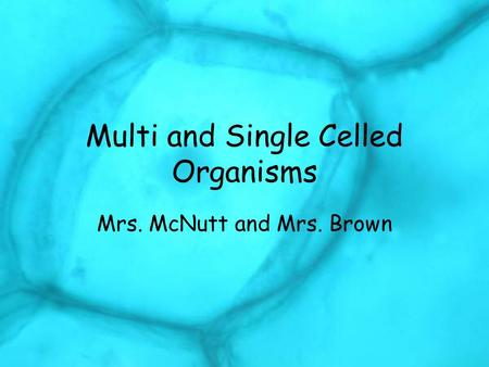 Multi and Single Celled Organisms Mrs. McNutt and Mrs. Brown.