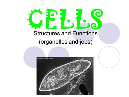CELLS Structures and Functions (organelles and jobs)