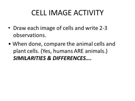 CELL IMAGE ACTIVITY Draw each image of cells and write 2-3 observations. When done, compare the animal cells and plant cells. (Yes, humans ARE animals.)