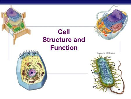 Cell Structure and Function Prokaryote bacteria cells Types of cells Eukaryote animal cells Eukaryote plant cells.