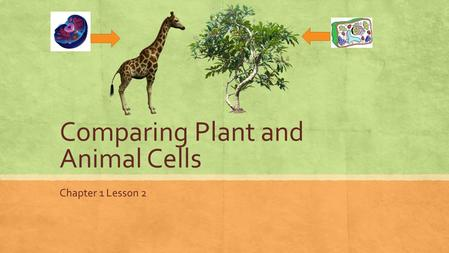 Comparing Plant and Animal Cells Chapter 1 Lesson 2.