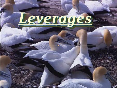 LeveragesLeverages. The ability to influence a system, or an environment, in a way that multiplies the outcome of one's efforts without a corresponding.