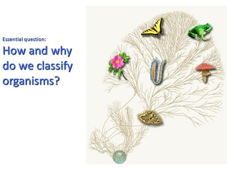 Essential question: How and why do we classify organisms?