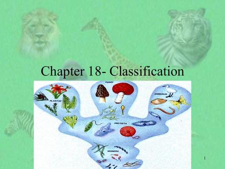 1 Chapter 18- Classification. 2 I. Finding order in Diversity A. Why classify? 1. To study the diversity of life, biologists use a classification system.