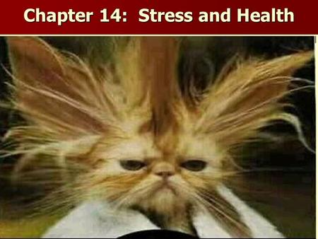 Chapter 14: Stress and Health. Studying the Effects of Stress on Health Behavioral Medicine: field that combines knowledge of biomedical perspective and.
