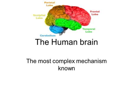 The Human brain The most complex mechanism known.